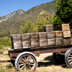 Apple Picking  in Southern California – Finding Fall