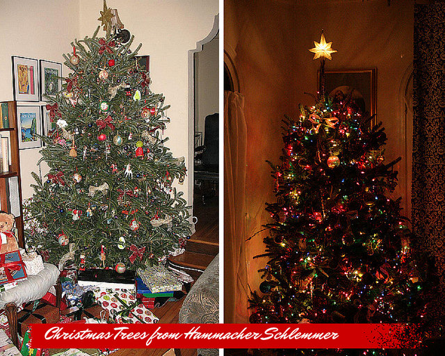 Real Christmas Trees online