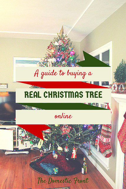 Live Christmas Tree Online Buying Guide.