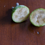 From My Garden:  Pineapple Guavas